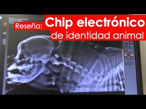 Chip De Facebook