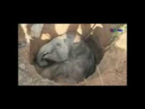 RESCUE BABY WILD ELEPHANT FROM WELL (FULL)