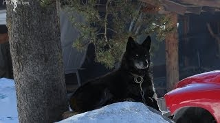 Ski, Snow, Dog Sled, and Whitefish,MT Thumbnail