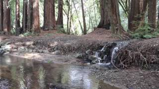 1 Hour of Nature Ambience | Creek in a Redwood Forest