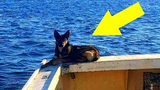 Hund fällt in den Ozean, Wochen später bekommt der Besitzer einen seltsamen Anruf