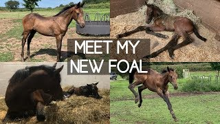 I BOUGHT A FOAL!!!
