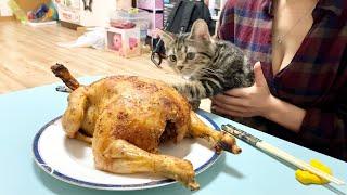 子猫に鶏を丸ごと一羽プレゼントしたらすごかったw