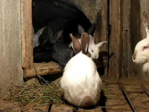 Кролики в яме.
