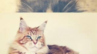 Топ 5 лучших пород кошек для семьи