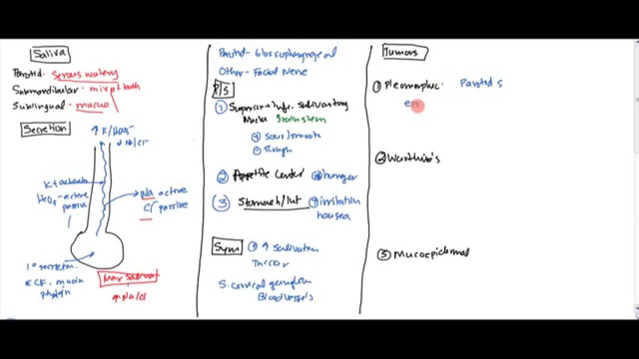 01 Saliva (Anatomy, Physiology and Tumors) - YouTube