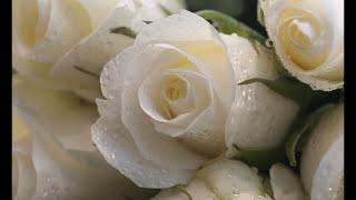 Букет из белых роз. Ирина Круг и Виктор Королев.  Very beautiful music.