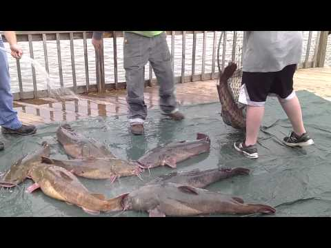 Catfishermans Paradise Camden Ohio from YouTube · Duration:  1 minutes 59 seconds  · 1,000+ views · uploaded on 6/18/2014 · uploaded by Dustie Martin