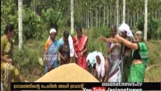 Harvesting festival at Payyanur Korom
