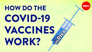 How the COVID-19 vaccines were created so quickly - Kaitlyn Sadtler and Elizabeth Wayne