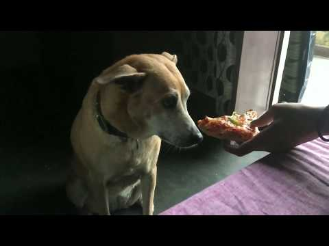 Confused Doggo makes Pizza choice | Wildly Indian