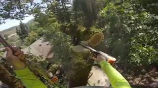 Old Growth Oak Removal - Technical Rigging of Branches and Wood