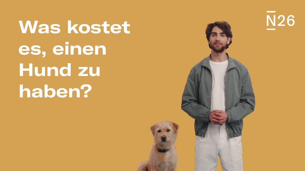 Wie viel kostet ein Hund? - YouTube