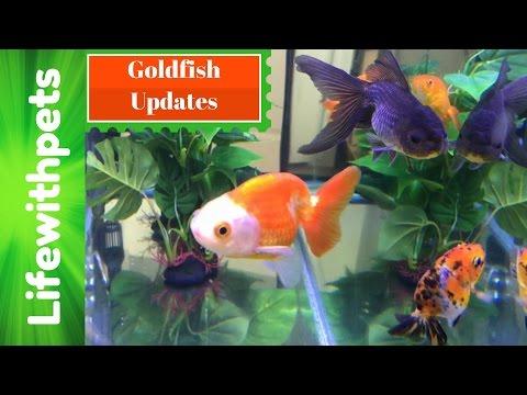 HUGE Goldfish Updates