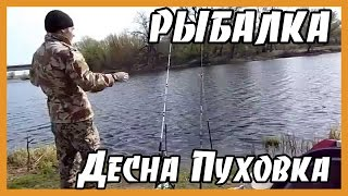 Рыбалка Десна, Пуховка(, 2016-01-14T20:09:36.000Z)