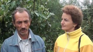 видео 02. Уход за штамбами плодовых деревьев. Сентябрь