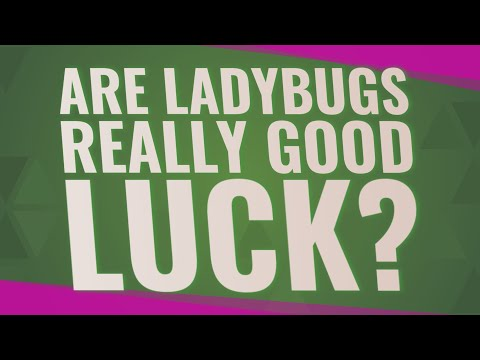 Are Ladybugs Really Good Luck?