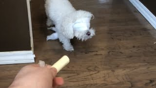 Bird Box Challenge: Dog Edition