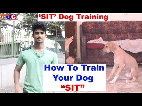 "How To Train Your Dog "" SIT"" : Dog Training Videos : TUC"