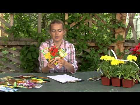 Дизайн цветников. Правила подбора цветов для цветника.Часть 1
