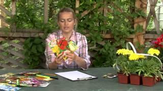 видео Правила сочетания цветов и растений при составлении ландшафтных композиций