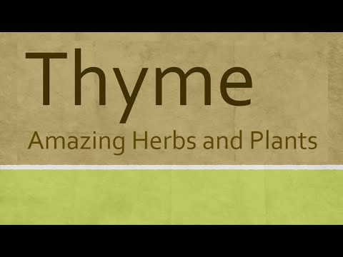 Amazing Benefits of Thyme herb - Health benefits of thyme herb - Thyme Herb and Plants