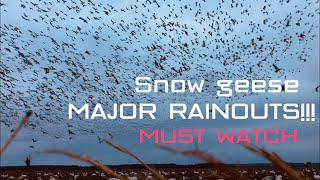 MONSTER RAINOUTS SNOW GEESE