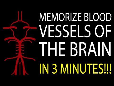 MNEMONIC Brain's Blood Supply: MEMORIZE in 3 Minutes