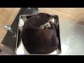 【カワウソさくら】箱入り娘と化すカワウソ otter