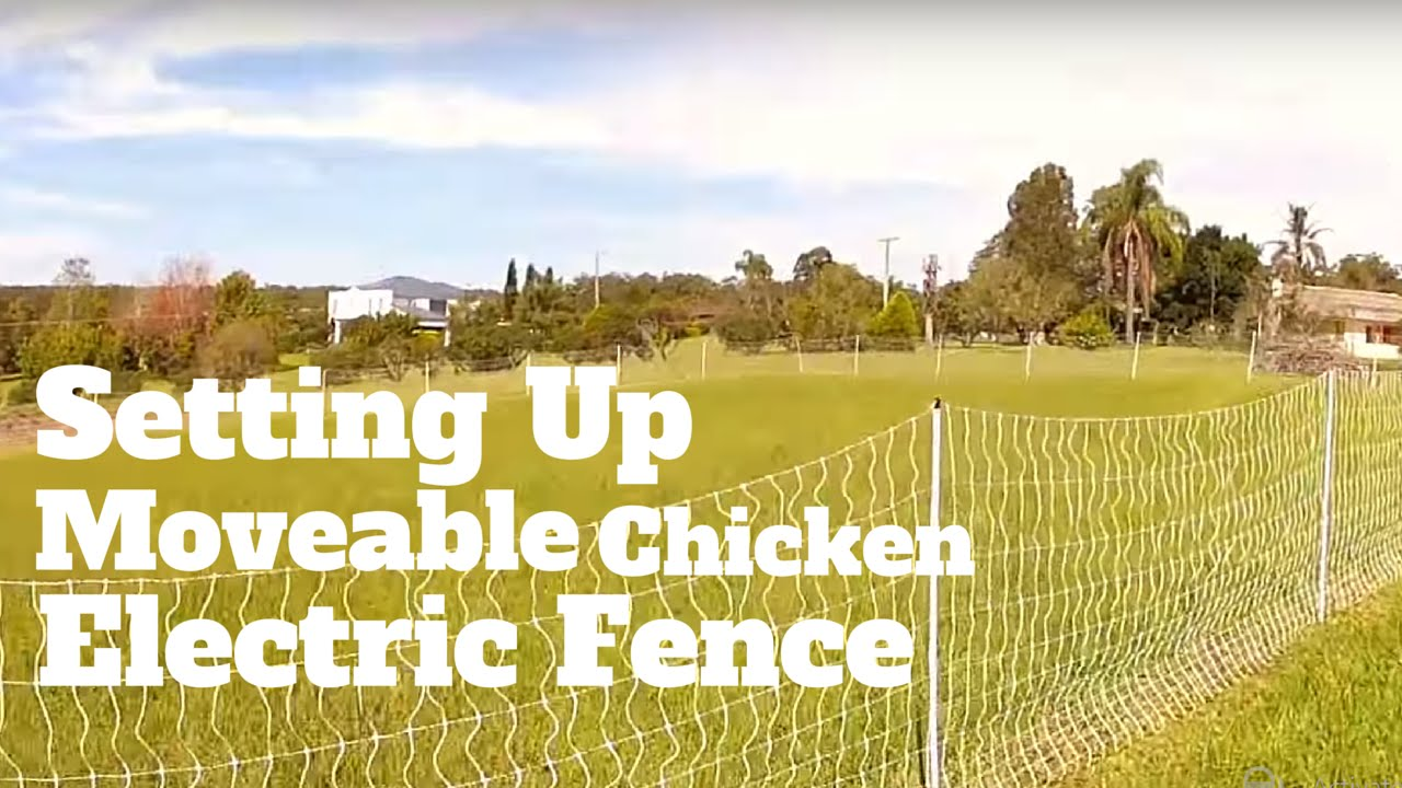 Setting up Moveable Chicken Electric Fence
