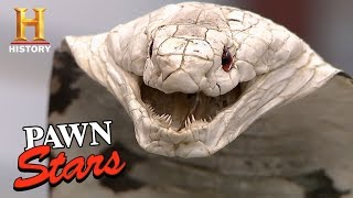 Pawn Stars: Taxidermy Cobra for sale...or Not? | History