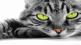 10 невероятных диких кошек, о которых мало кто знает. Кошки [Удивительный мир#49]