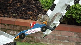 Amazing Squirrel Grand Prix Furmula 1 Obstacle Course