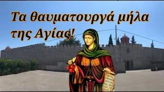 28 Ιουλίου: Αγία Ειρήνη Χρυσοβαλάντου - Τα θαυματουργά μήλα της Αγίας!
