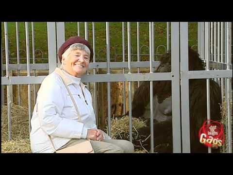 Old Woman Beats Up Gorilla