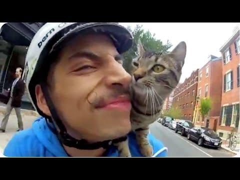 Biker's Best Friend | Cat Rides on Shoulder