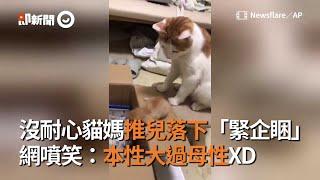 貓媽沒耐心,推兒進箱子睡覺!網笑:本性大過母性XD|寵物|貓|親子