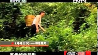 地理中国 《地理中国》 20121006 系列节目《寻奇天下》——绿色精灵 Video