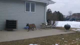 Riley Mchenry Illinois Dog Training Black Jack K9