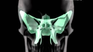伊東マンショ「Mancio-3D program」
