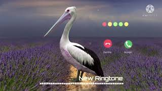 Funny Voice Message Notification Ringtone Cute Voice Message Ringtone sad sms ringtone love sms