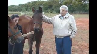 Cavalo charlie frase de onde veio a