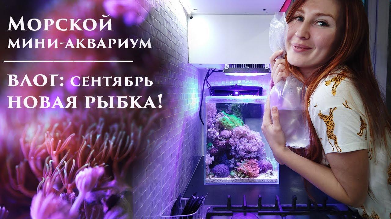Море 30л влог: Новая рыбка! Снова про добавки. Фито и зоо планктон.