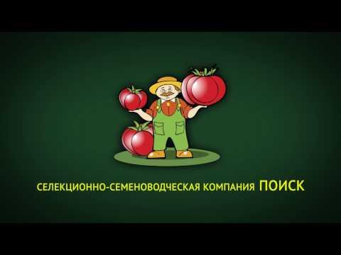Лучшие сорта и гибриды томатов для любителей