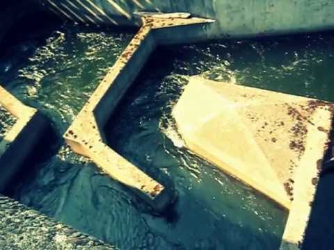 bonneville dam fish ladder spawning salmon on the move