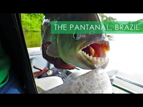 Pantanal Wildlife & Piranha Fishing - Travel Deeper Brazil (Ep. 8)