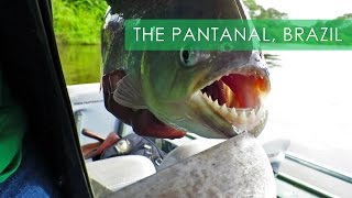 Pantanal Wildlife & Piranha Fishing – Travel Deeper Brazil (Episode 8)