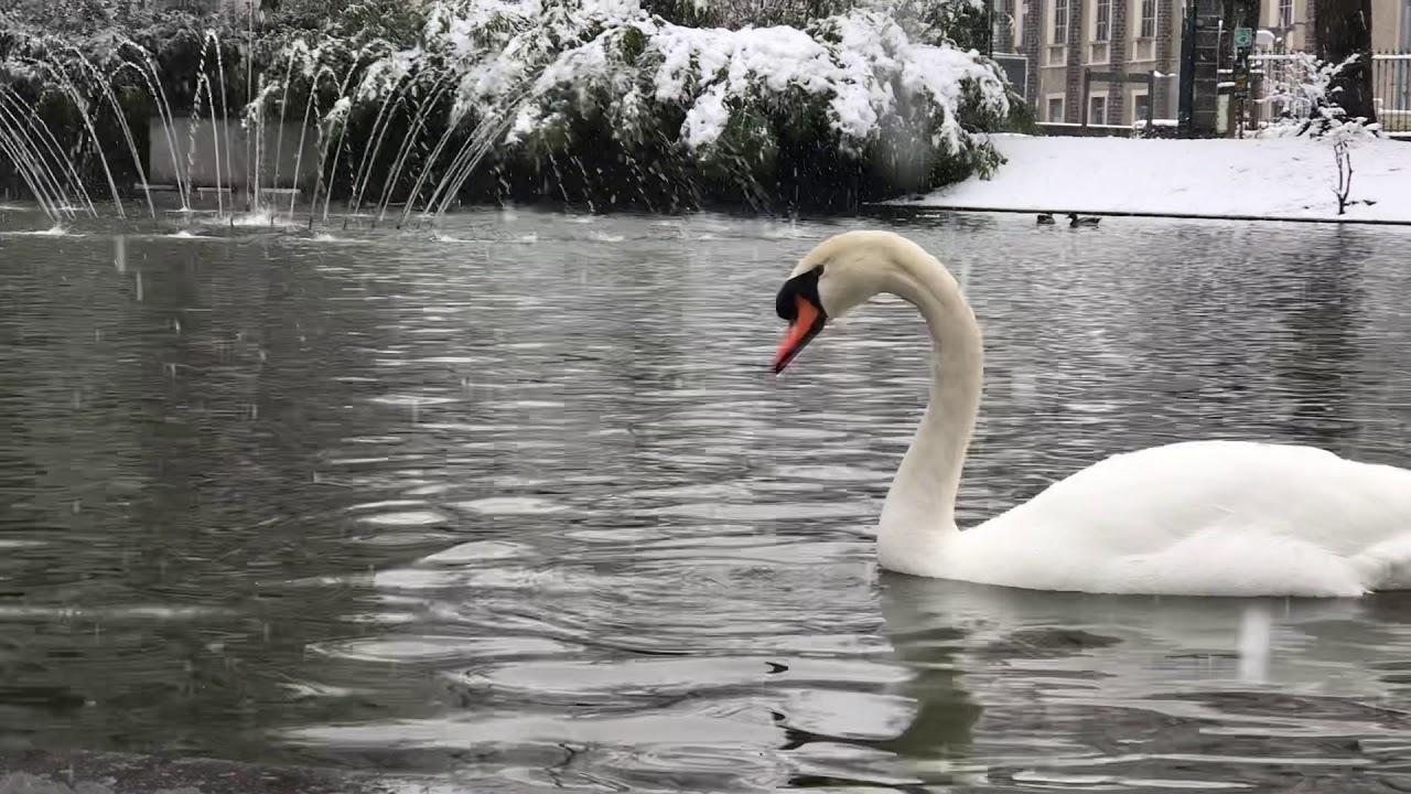 Le Jardin Lecoq sous la neige - YouTube