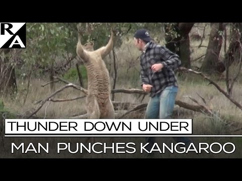 RIGHT ANGLE: MAN PUNCHES KANGAROO