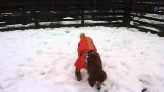 シェリー、年を取っても雪が大好き!